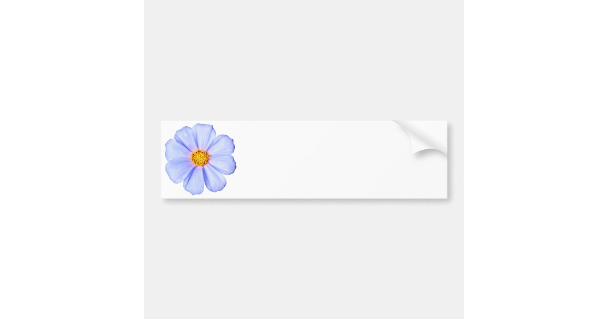blue flower customized cosmos daisies template bumper sticker zazzle. Black Bedroom Furniture Sets. Home Design Ideas
