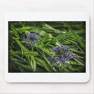 Blue Flower Duo Mouse Pads