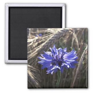 Blue Flower in Grain 2 Inch Square Magnet