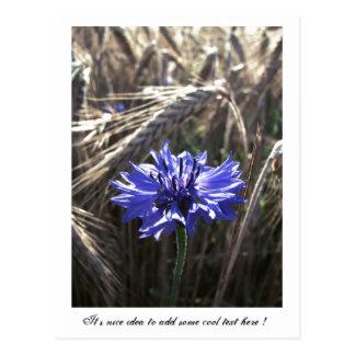 Blue Flower in Grain Postcard