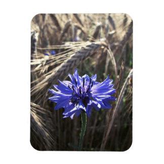 Blue Flower in Grain Rectangular Photo Magnet