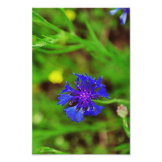 Blue flower photo print