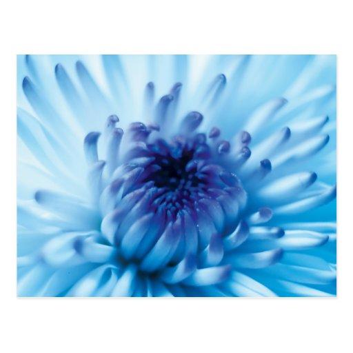 Blue Flower Post Card