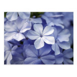Blue Flower Postcard