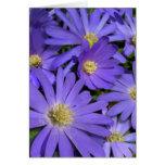 Blue Flowers Card Daisy Greeting Card Blank