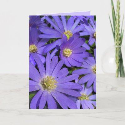 Flower Birthday Card Beautiful Blue Daisy Greeting Card