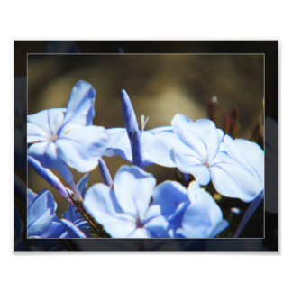 Blue Flowers in Bloom photo print