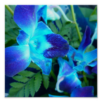 blue flowers Nature Poster