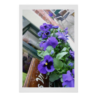 Blue flowers on terras poster