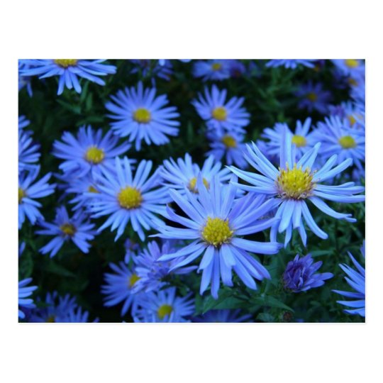 Blue Flowers Postcard