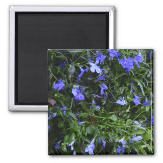 Blue Flowers with Water Droplets Refrigerator Magnets