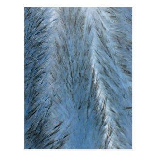Blue Fluff Postcard