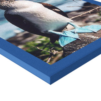 Blue-footed birdy canvas print