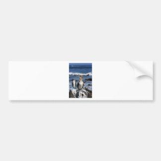 Blue footed Boobies Galapagos Islands Bumper Sticker