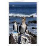 Blue footed Boobies Galapagos Islands Greeting Card