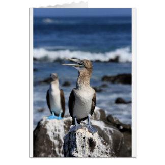 Blue footed Boobies Galapagos Islands Card