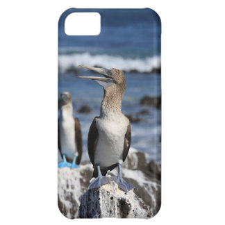 Blue footed Boobies Galapagos Islands iPhone 5C Case