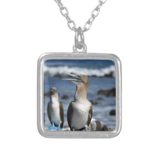Blue footed Boobies Galapagos Islands Square Pendant Necklace