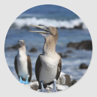 Blue footed Boobies Galapagos Islands Round Stickers