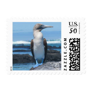 Blue Footed Booby Postage Stamp