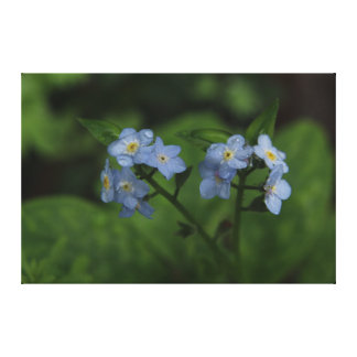 Blue Forget-me-newts Canvas Print