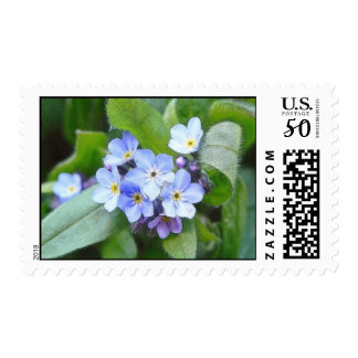 Blue Forget Me Not Flowers Postage