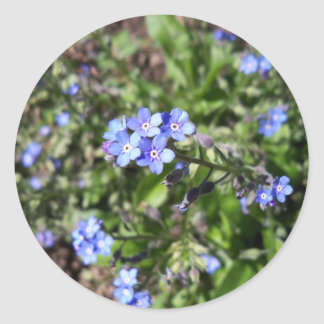 Blue Forget Me Not Stickers