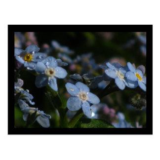 Blue Forget-Me-Nots Flowers Postcard