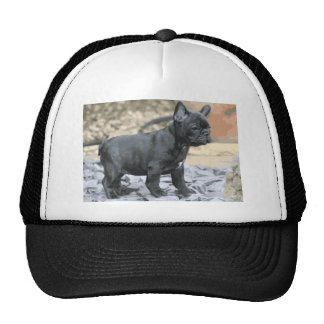 BLUE FRENCHIE MESH HATS