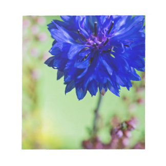 Blue fresh cornflower on green blurred background notepad