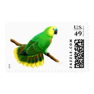 Blue Front Amazon Parrot Postage