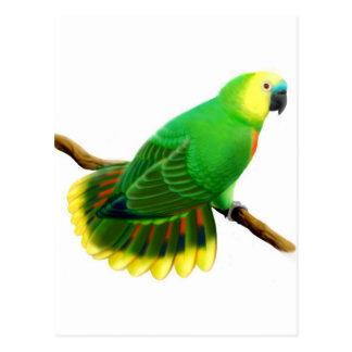 Blue Front Amazon Parrot Postcard