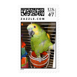 Blue Front Amazon Stamp