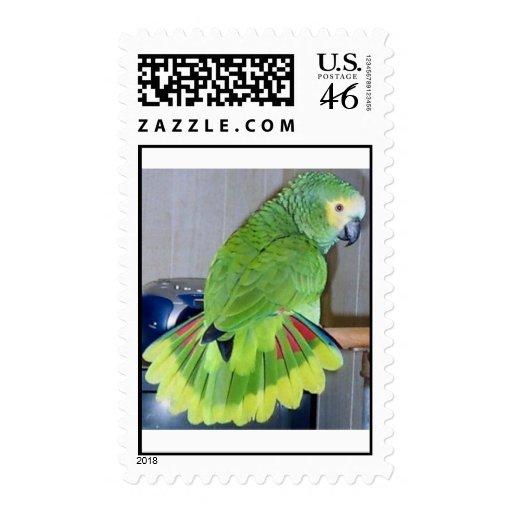 Blue-front displaying stamp