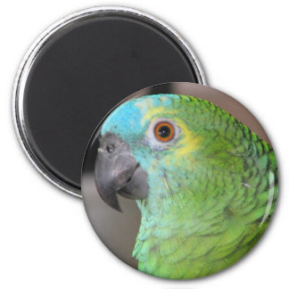 Blue Fronted Amazon 2 Inch Round Magnet