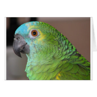 Blue Fronted Amazon Card