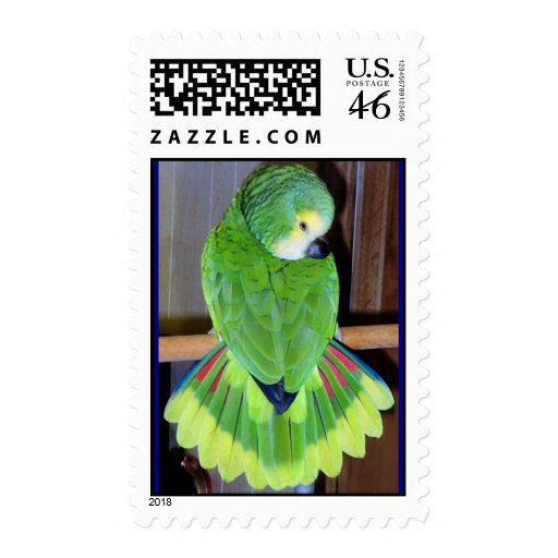 Blue-fronted Amazon displaying Postage Stamps