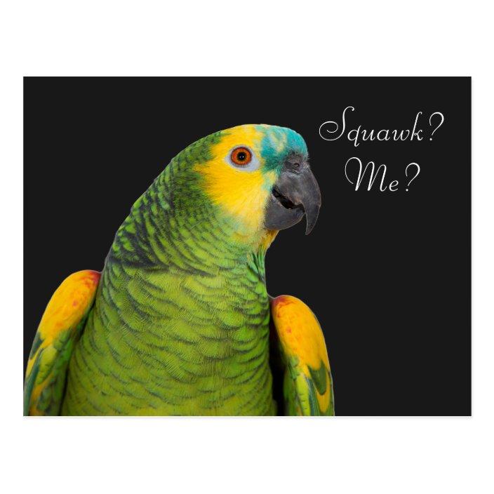 Blue Fronted Amazon Parrot Black Postcard Zazzle Com