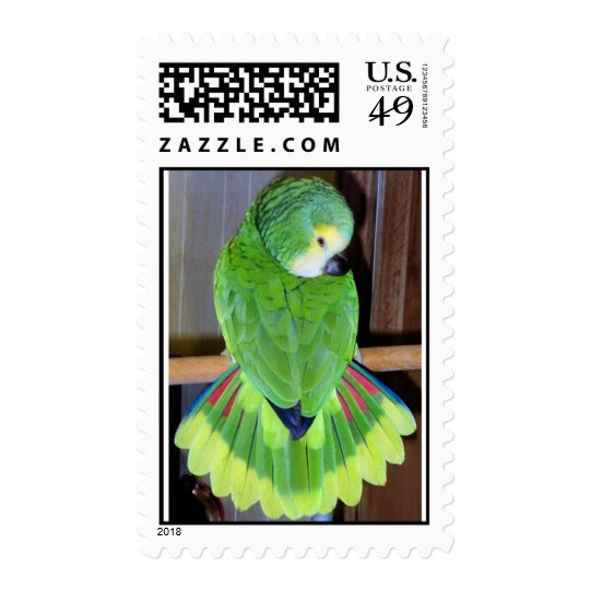 Blue fronted Amazon parrot displaying Postage