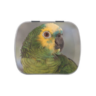 Blue-fronted amazon parrot. jelly belly candy tins