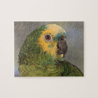 Blue-fronted amazon parrot. puzzle