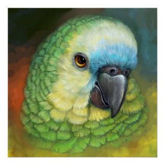 Blue fronted amazon parrot realistic painting poster