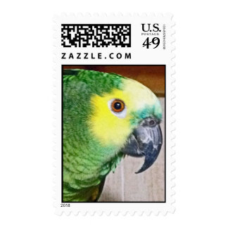 Blue-fronted Amazon Stamp