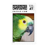 Blue-fronted Amazon Postage Stamp