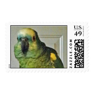 Blue-fronted Amazon Postage Stamps