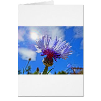 blue garden cornflower in sunlight card