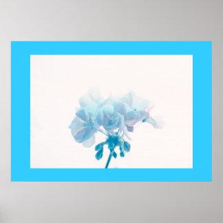 Blue Geranium Poster