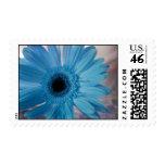 Blue Gerber Daisy Postage Stamp