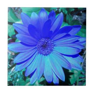 Blue Gerbera Daisy Tile