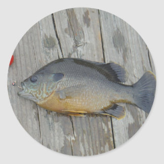 blue gill fish classic round sticker